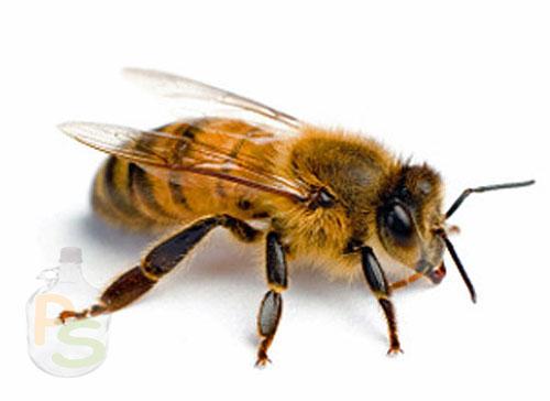 Пчела как источник витаминов