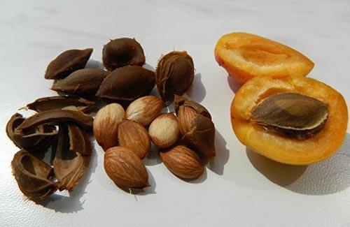 Косточки абрикоса.