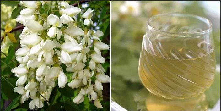домашнее вино из цветков белой акации